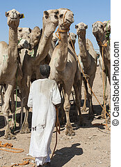 Bedouin trader at an african camel market - Traditional ...