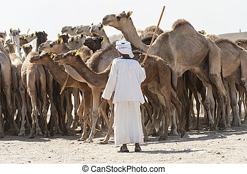Bedouin trader at an african camel market - Traditional...