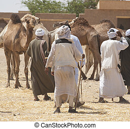 Bedouin traders at a camel market - Bedouin traders at an...