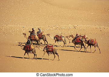 Bedouins riding camels on Giza Plateau, Cairo, Egypt