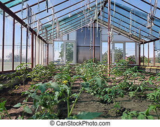 beds with bushes in the greenhouse