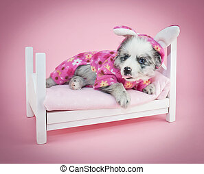 Silly Aussie puppy laying in bed wearing bunny pajamas sticking out her tongue on a pink background.