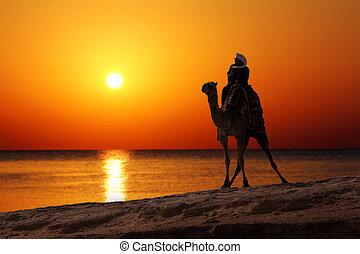 beduíno, ligado, camelo, silueta, contra, amanhecer