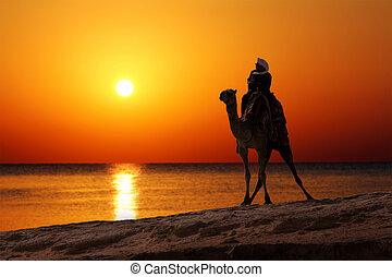 beduine, auf, kamel, silhouette, gegen, sonnenaufgang