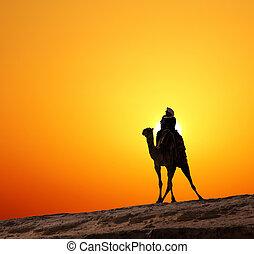 beduine, silhouette, sonnenaufgang, gegen, kamel