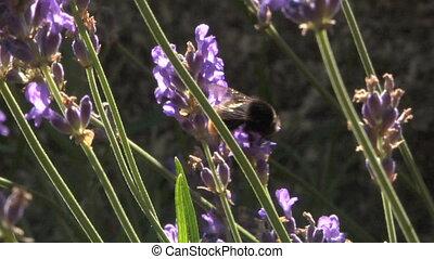 bee 101
