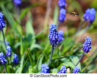 Bee among blue flowers