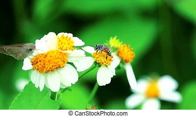bee and butterfly find Nectar from flowers