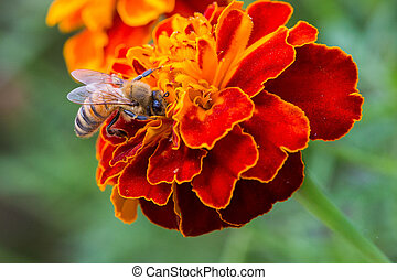 Bee and flower.