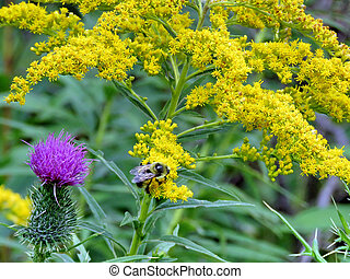 Bee and flowers in forest