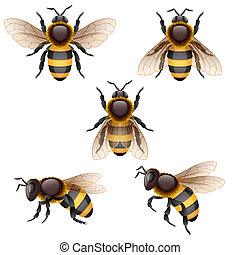 bee - Vector illustration - bees on white, EPS 10, RGB. Use...