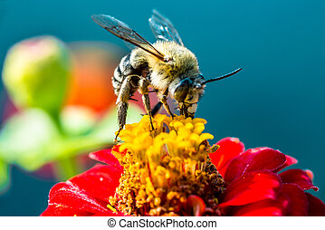 bee collecting nectar from a red flower with the...