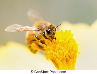 bee collecting nectar on yellow flower
