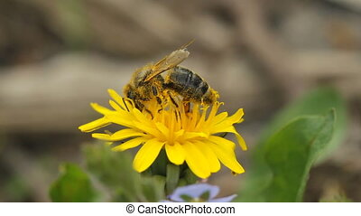 bee collects nectar and flies