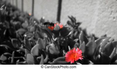 Bee Color effect