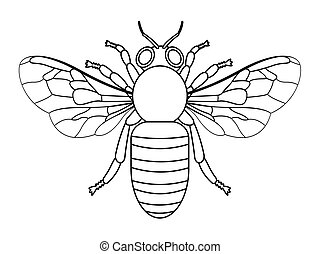 Bee contour illustration