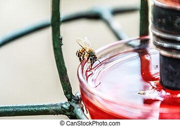 bee drinking from a bird bath