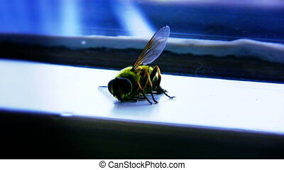 Bee Dying 01