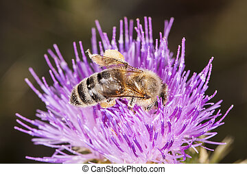 bee eating on the flower