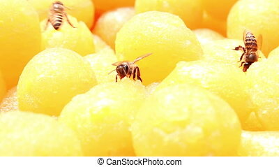 bee eating traditional Thai dessert - bee eating a...