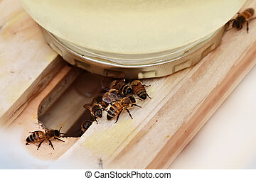 Bee Feeder - Honey bees feeding from a homemade feeder. ...
