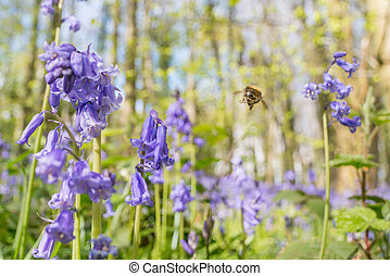 Bee flying in bluebells