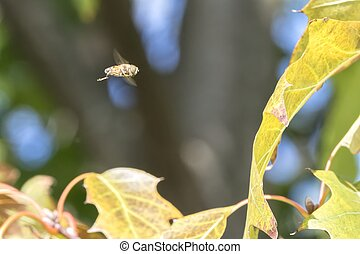 bee flying in the forest