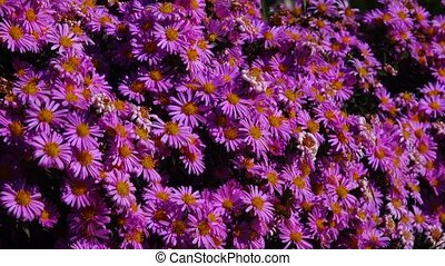 bee  on flowers in the autumn