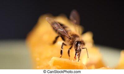 Bee gathering honey and nectar