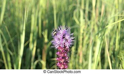 Bee gets nectar than flies away.