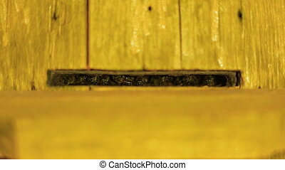 Bee guards guard the entrance to the hive by night