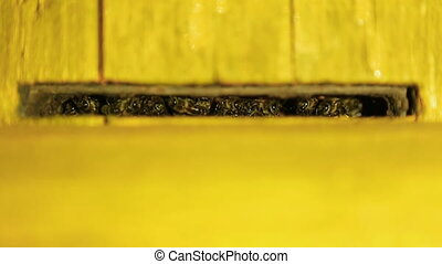 Bee guards guard the entrance to the hive by night. Yelow beehive close-up.