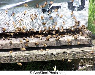 Bee Hive - Bees at hive entrance