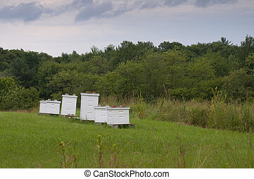 Bee hive boxes - Honey bee hives decorate a lush green...