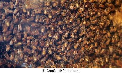 Bee hive closeup
