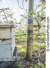Bee Hive in Pear Plantation