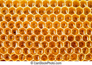 bee honey in honeycomb closeup