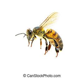Bee in flight on white