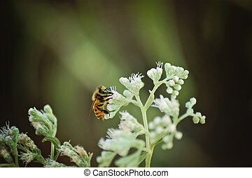 bee in flowers