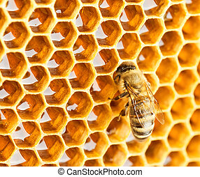 Bee in honeycomb