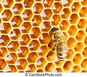 Bee in honeycomb
