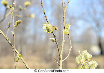 Bee in spring forest