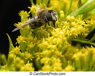 Bee in yellow