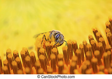 bee insects
