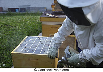 bee keeper at work with wooden box