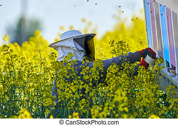 Bee keeper working on the hives
