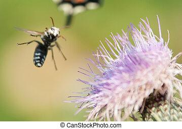 bee landing on flower - yellow jacket landing on flower