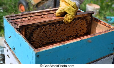 Bee master on apiary. Man in protective hat works with ...