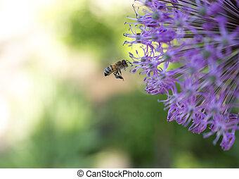 bee near purple flower in flight