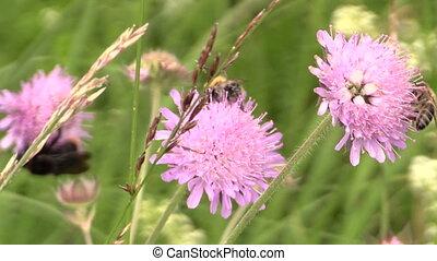 bee nectar flower